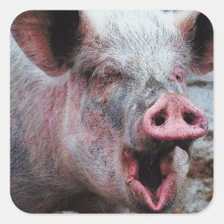 Dirty Pig Sticker