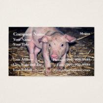 Dirty piglet business card