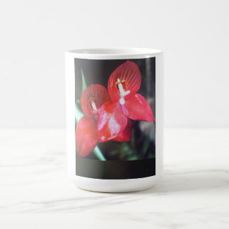 disa flower coffee mug