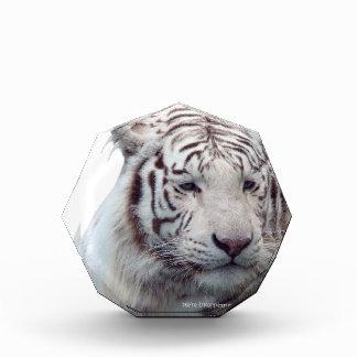 Disappearing Tigers Acrylic Award