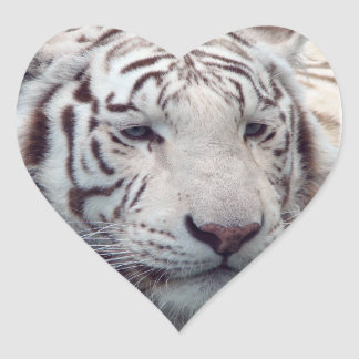 Disappearing Tigers Heart Sticker