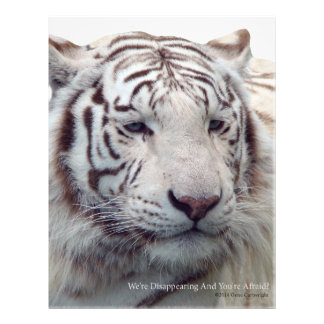 Disappearing Tigers Letterhead