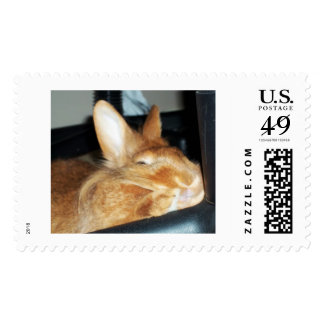Disapproving Bunny Captain Carrotpants Postage
