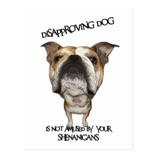 Disapproving Dog Bulldog Not Amused by Shenanigans Post Cards