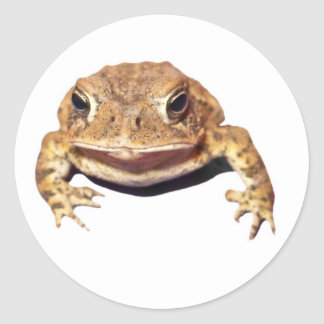 Disapproving Toad Classic Round Sticker