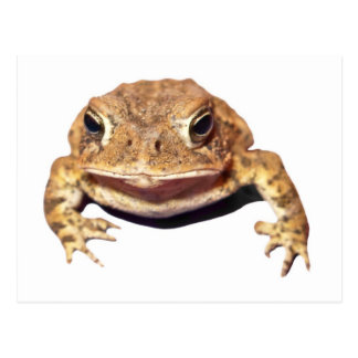Disapproving Toad Postcard