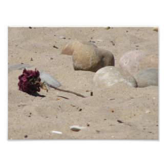 Discarded Flower Photo