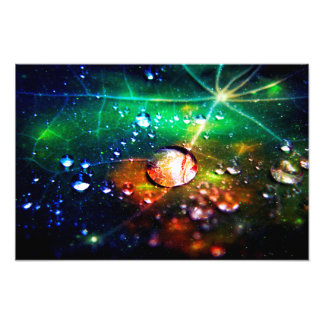 Disco Dew Photo Print