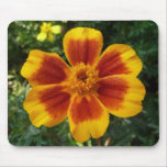 Disco Marigold Orange and Red Flower Mouse Pad