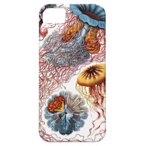 Discomedusae de Ernst Haeckel Funda Para iPhone SE/5/5s