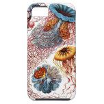 Discomedusae de Ernst Haeckel iPhone 5 Fundas