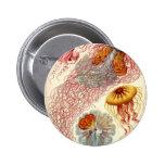 Discomedusae Jellyfish Pinback Button