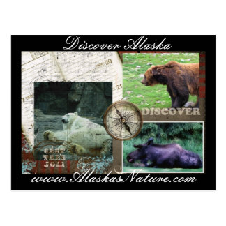 Discover Alaska Postcard