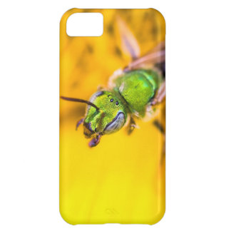 discovering yellow cover for iPhone 5C