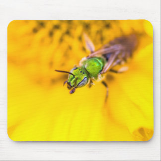 discovering yellow mouse pad