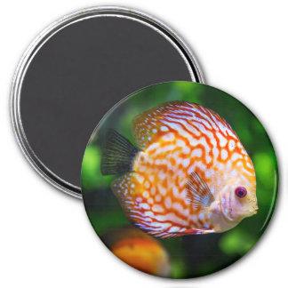 Discus Fish Ocean  Photo Magnet