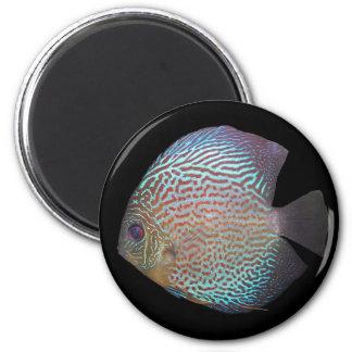 Discus magnet 2