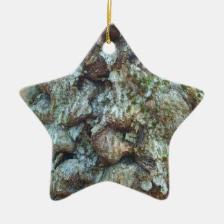 diseased beech.jpg ceramic ornament
