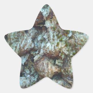 diseased beech.jpg star sticker