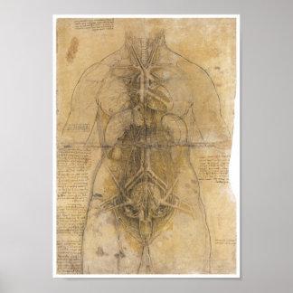 Disección de los órganos de una mujer, da Vinci Póster