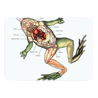 disected frog cutting board.png card