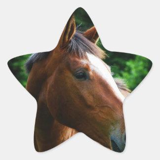 Diseñe su propia forma de encargo de la estrella d