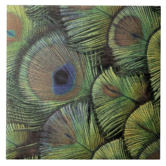 Diseño 2 de la pluma del pavo real azulejo cuadrado grande