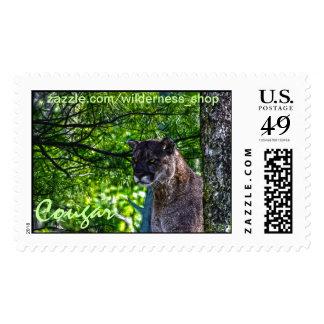 Diseño 6 del arte del gato grande del león de sello