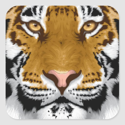 diseño animal de la cabeza del tigre de la fauna pegatina cuadrada