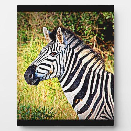 Diseño animal de la foto del parque zoológico afri placas de madera
