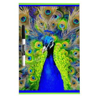Diseño azul de las plumas del pavo real pizarras blancas