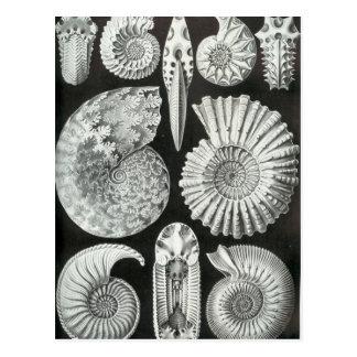 Diseño blanco y negro hermoso del modelo de las am postal