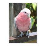 Diseño color de rosa de la fotografía del Cockatoo Invitacion Personalizada
