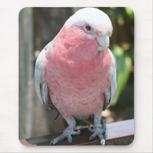 Diseño color de rosa de la fotografía del Cockatoo Alfombrillas De Ratones