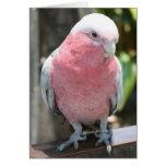 Diseño color de rosa de la fotografía del Cockatoo Tarjetas