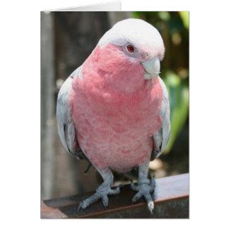 Diseño color de rosa de la fotografía del Cockatoo Tarjeta Pequeña