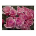 Diseño color de rosa rosado de la fotografía del m tarjetas postales