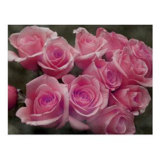Diseño color de rosa rosado de la fotografía del postales