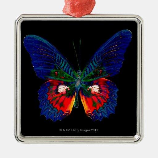 Diseño colorido de la mariposa contra el contexto ornamentos de reyes magos