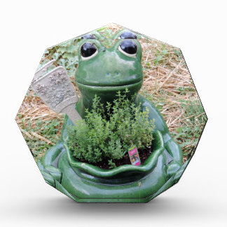 Diseño conseguido de la foto del jardín de hierbas