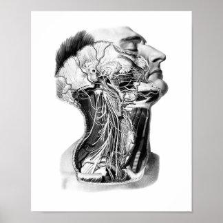 Diseño de la anatomía de la cabeza humana impresiones