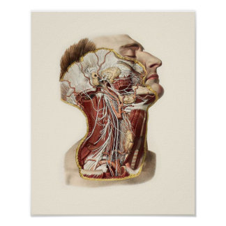 Diseño de la anatomía de la cabeza humana posters