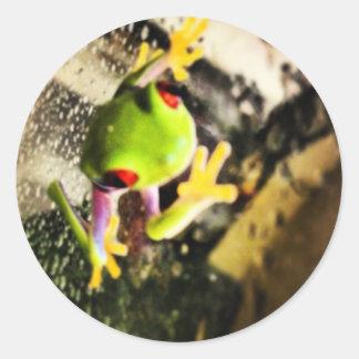 Diseño de la foto de la rana arbórea pegatinas redondas