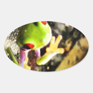 Diseño de la foto de la rana arbórea calcomanías ovaladas