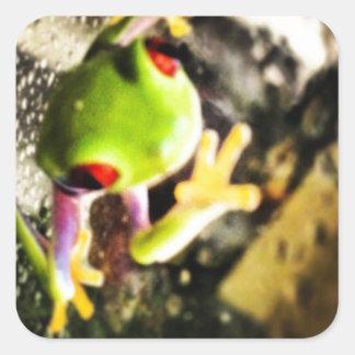 Diseño de la foto de la rana arbórea calcomanía cuadradas personalizada