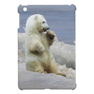 Diseño de la fotografía de la fauna de Cub del oso iPad Mini Coberturas