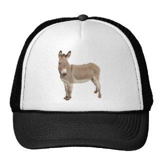 Diseño de la fotografía del burro gorros bordados