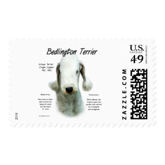 Diseño de la historia de Bedlington Terrier Envio