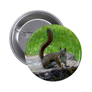 Diseño de la naturaleza animal de la ardilla pins