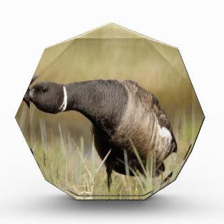 Diseño de la naturaleza del ganso de Brent